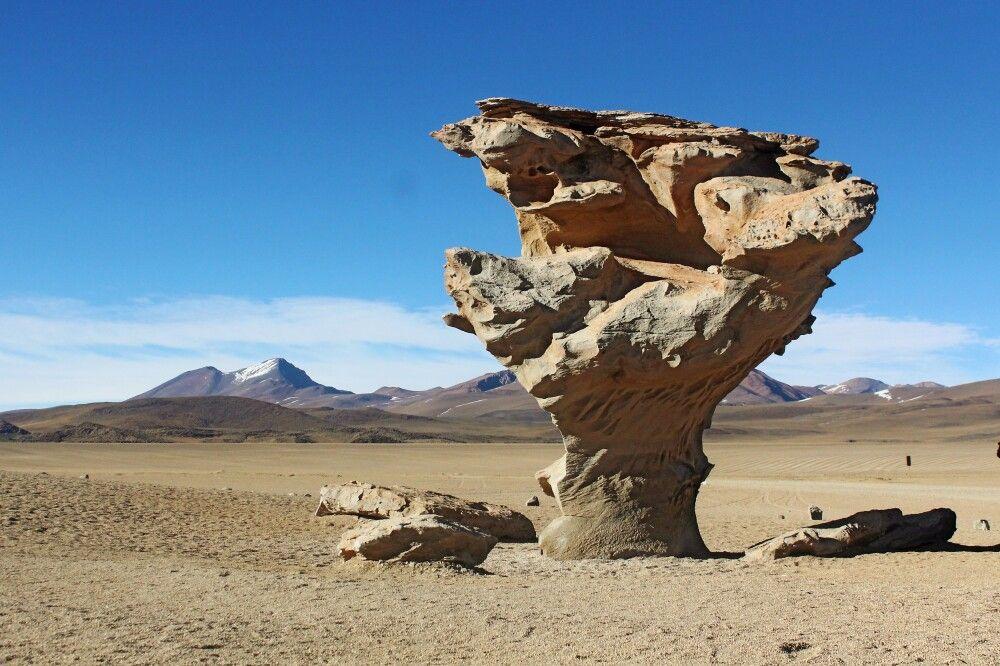 Steinbaum Arbol de Piedra
