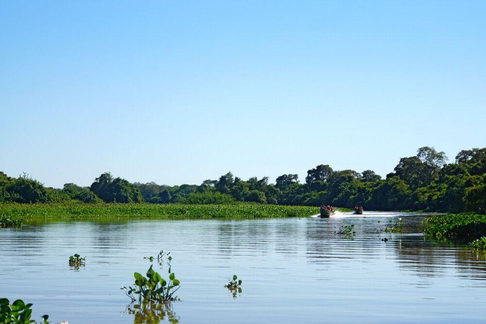 Tierbeobachtung per Boot im Südpantanal