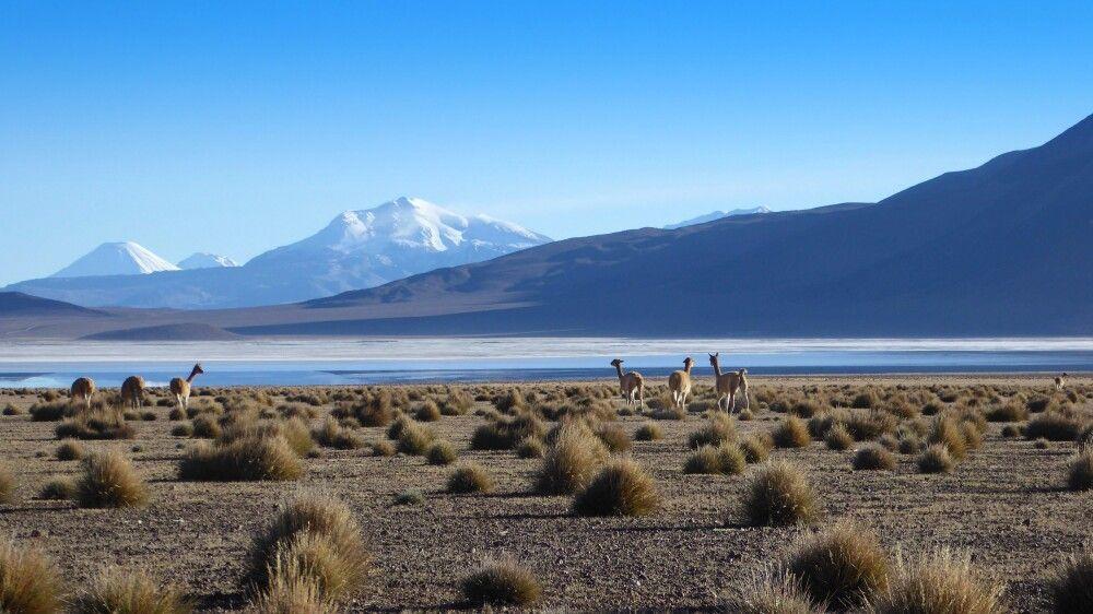 Impressionen der Atacama-Wüste