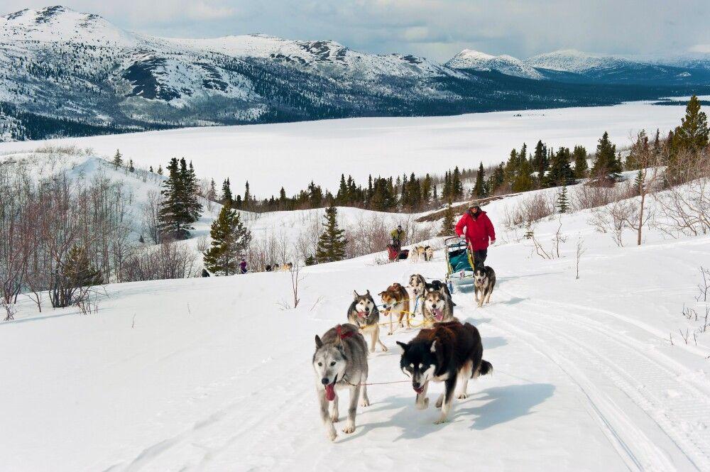 Die Huskys ziehen Sie fleißig über Hügel und Seen