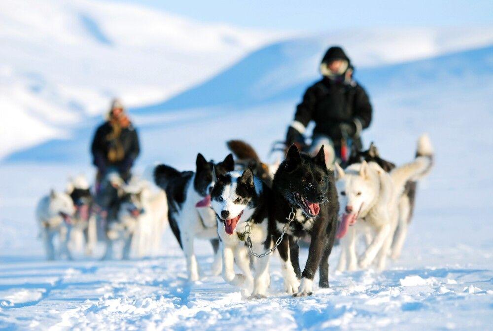 Hundeschlittentour im winterlichen Spitzbergen